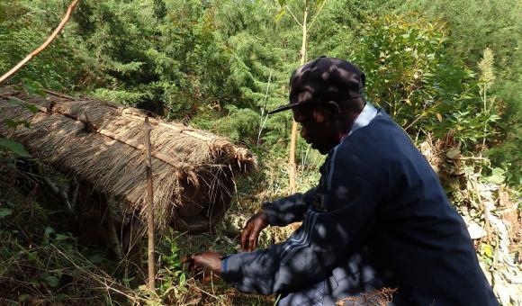 Ruche traditionnelle au Congo RDC - Sud Kivu
