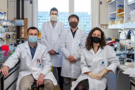 L'équipe de chercheurs du professeur Collet accueille depuis la mi-octobre des collègues japonais. De gauche à droite : Alexandre Marbaix, Michael Deghelt, Hiroyuki Kanamaru et Carla Aspite