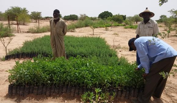 Bonkounkou Issiaka tree nursery at Tidiallé (Tongomayel 26-06-18)