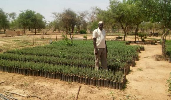 Salif OUEDRAOGO tree nursery at Niamanga (Pobé Mengao) at the end of June 2019