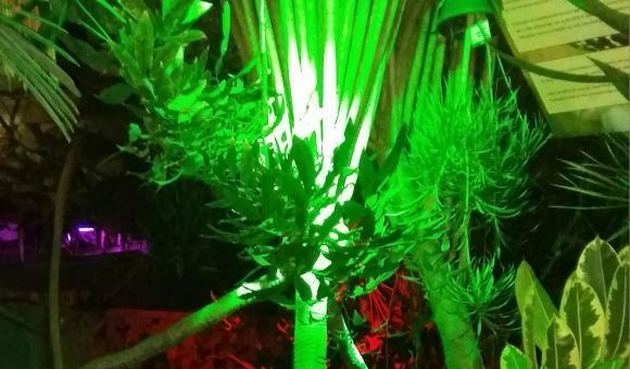 Botanic Night