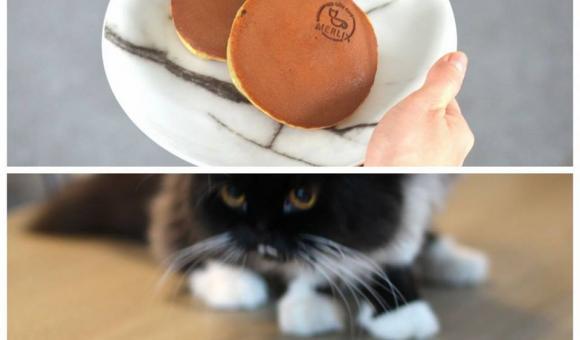 First cat cafe opens in Liège