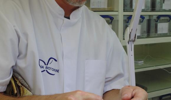 Traite sur scorpion (Heterometrus cyaneus) – Indonésie (c) C. Vanbellingen – Alphabiotoxine Laboratory