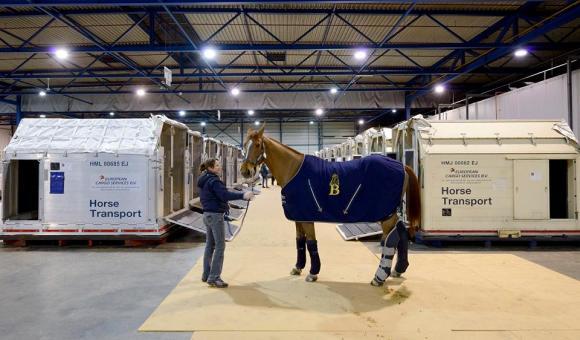 Chaque année, plus de 3.000 chevaux transitent par Liege Airport.