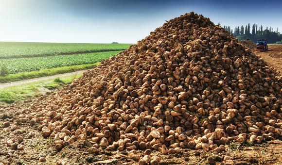 Petiva produit un sucre 100% naturel et sans calories à base de betteraves.